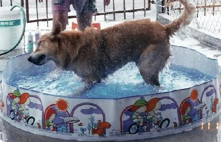 Chester In Pool