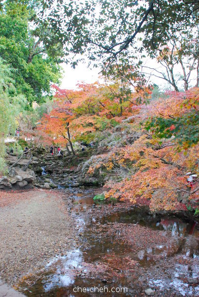 Beautiful Fall Foliage At The Creek @ Nara Park, Nara