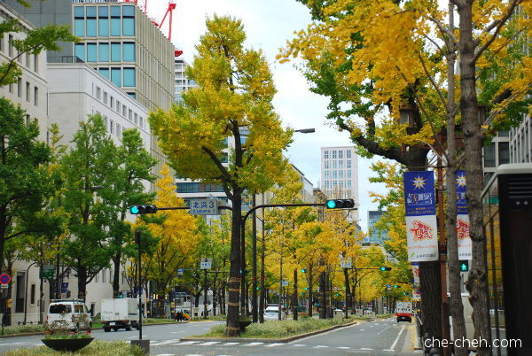 Golden Fall Ginkgo Trees @ Midosuji Avenue, Osaka