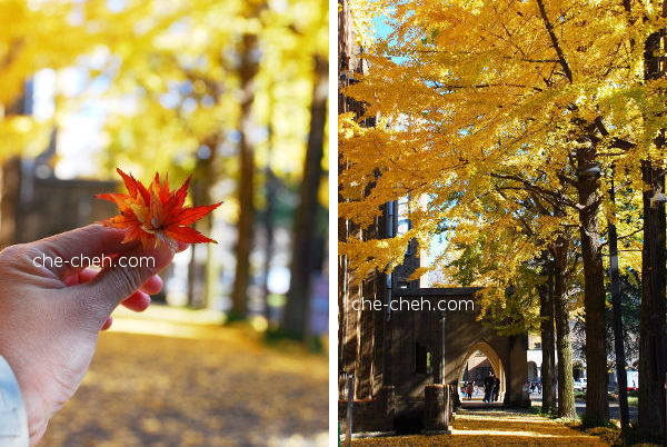 Beautiful Fall @ University Of Tokyo, Tokyo