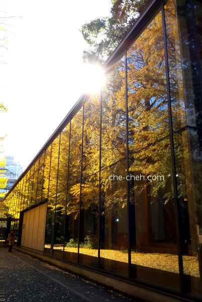 Reflected Golden Ginkgo Trees At Yayoi Auditorium @ University Of Tokyo, Tokyo