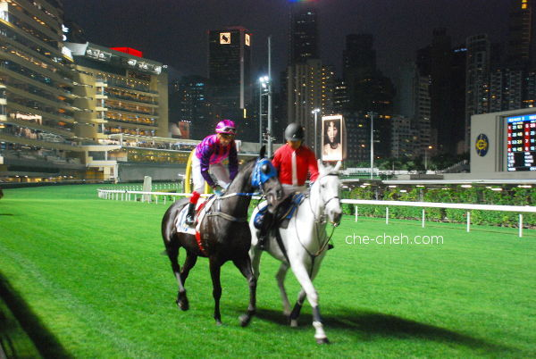 Jockey Riding To The Starting Point @ Happy Valley Racecourse, Hong Kong