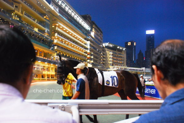 The Horse That I Betted On At The Parade Ring @ Happy Valley Racecourse, Hong Kong